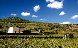cantina-donnafugata-pantelleria_ph-annapakula